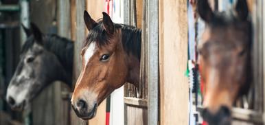 cavalli all'ippodromo