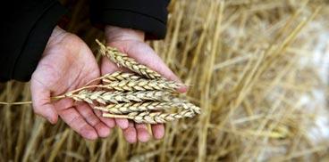 mani e grano