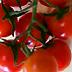 Pomodoro da mensa cherry