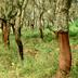 Linee guida di ricerca per il sughero e la silvicoltura