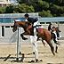 46° Premio Regionale del cavallo da Sella