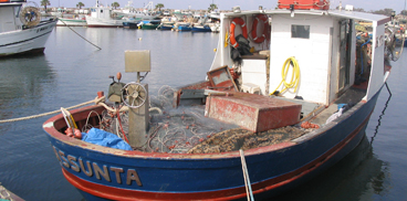 Pesca e itticoltura