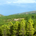 Convegno: pascoli demaniali e gestione sostenibile dei boschi