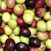 Adesione o mantenimento alla Dop Olio extravergine di oliva di Sardegna