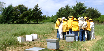 Giornate informative nel settore dell'apicoltura