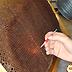 Apicoltura: rimozione di larve in una covata