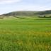 Paesaggio rurale della Marmilla