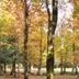 Foresta di Anela