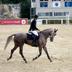 Premio regionale sardo del cavallo da sella, edizione 2009