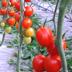 Prodotti fitosanitari di sintesi