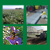 La nuova disciplina sull'uso sostenibile dei prodotti fitosanitari