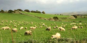 Sardegna Agricoltura Benessere Animale Avvio Attivita Formativaargomenti Produzioni Animali Benessere Animale