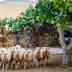 Seminario benessere animale e politiche per qualità