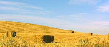 AGRIS - Innovazione e ricerca
