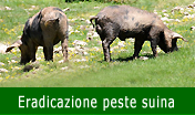 Vai allo Speciale sulla eradicazione Peste Suina Africana (PSA)