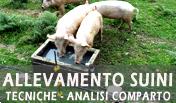 Suinicoltura, tecniche di allevamento e analisi del comparto